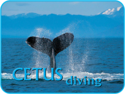 logo CETUS Diving